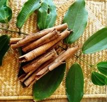 Cannelle-malgache